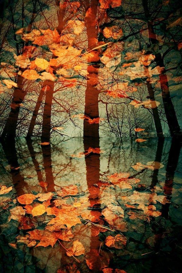 Image result for blustery sunset coloured autumn leaves Pinterest