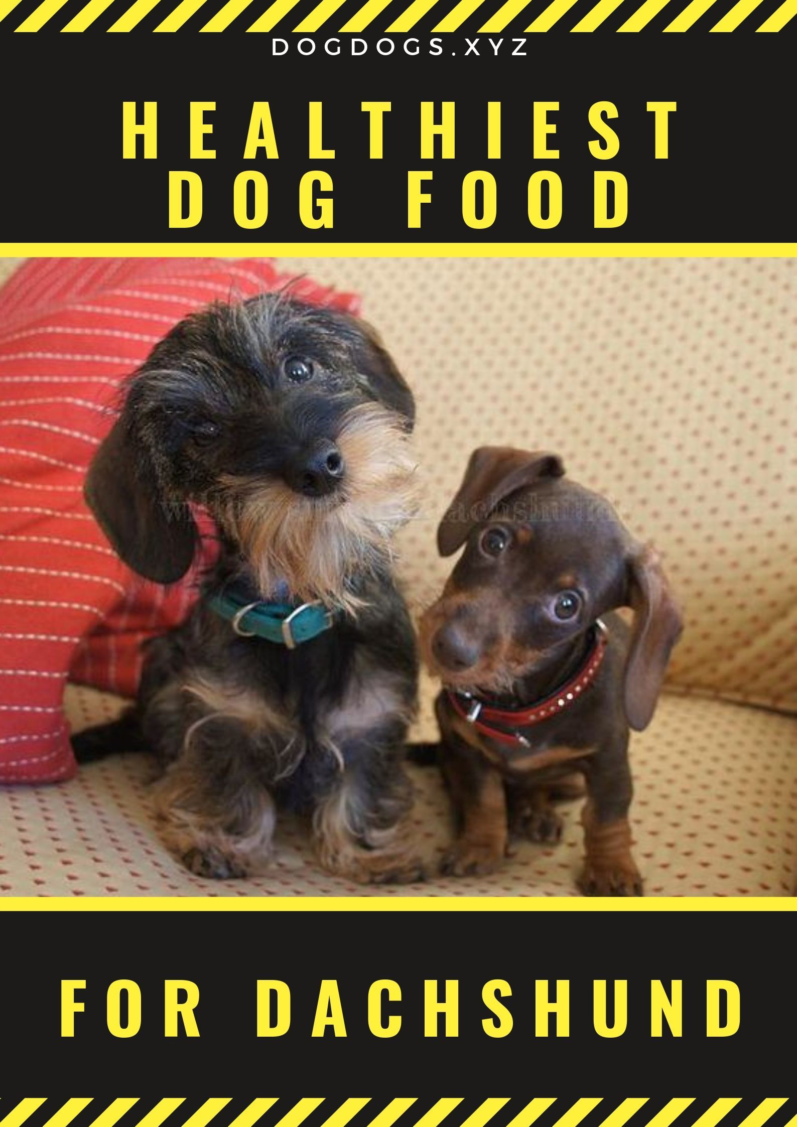 Top 7 Healthiest Dog Food Brands For Dachshund