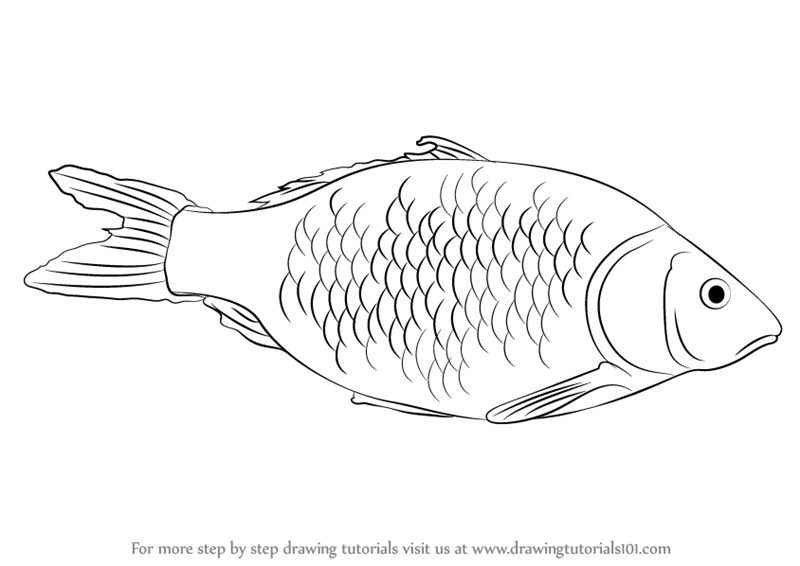 Learn How to Draw a Fish (Fishes) Step by Step : Drawing ...