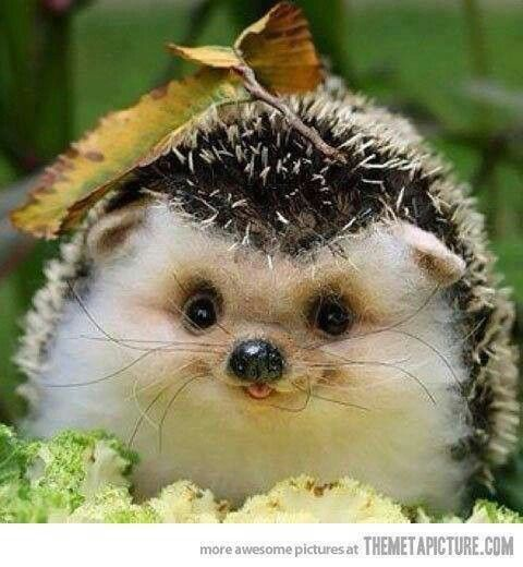 Happy baby hedgehog :)). Ahhhhhhhhhh so cute I'm gonna die ...