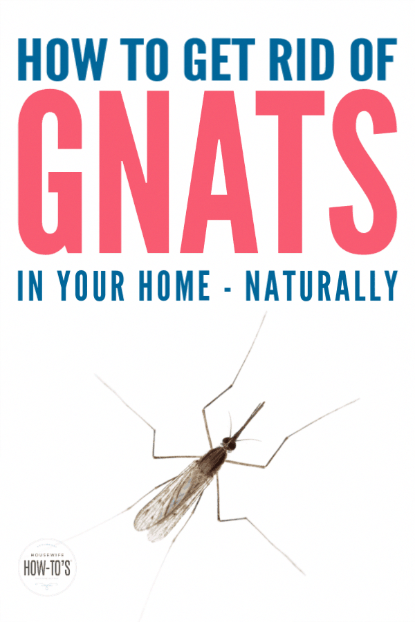 How to Get Rid of Gnats - Tips to find why gnats are getting into your home and get rid of them, even in your kitchen. Plus, natural gnat traps that kill them, so they're gone for good.  #housewifehowtos #gnats #gnattraps #pests #householdpests #naturalpestcontrol #gnatkiller #gnats