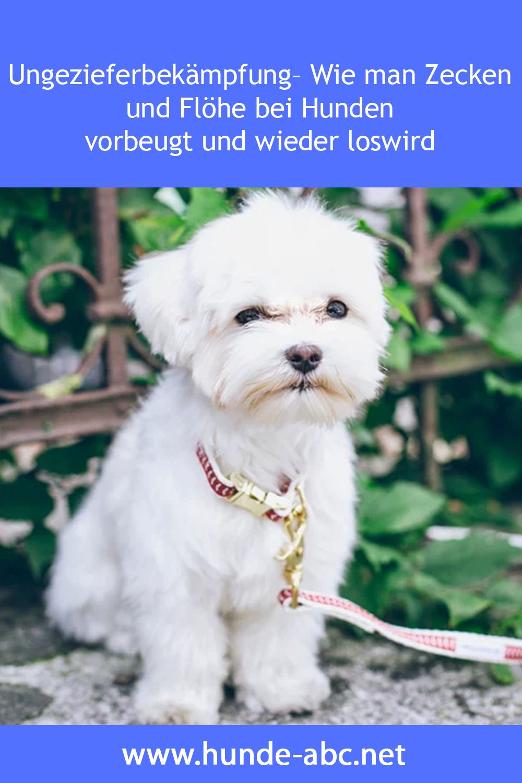 Ungezieferbekampfung Wie Man Zecken Und Flohe Bei Hunden Vorbeugt Und Wieder Loswird In 2020 Flohe Hund Hunde Susseste Haustiere