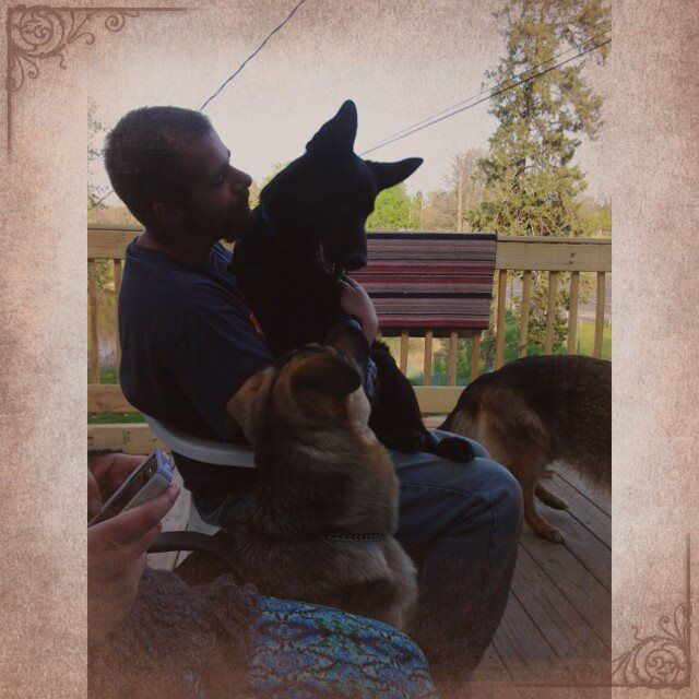 Hubby with Gibbs on his lap, Ziva by his side, and Pause in front of him. Love our GSDs!