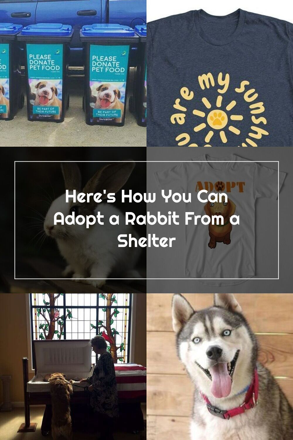 Here's How You Can Adopt a Rabbit From a Shelter in 2020