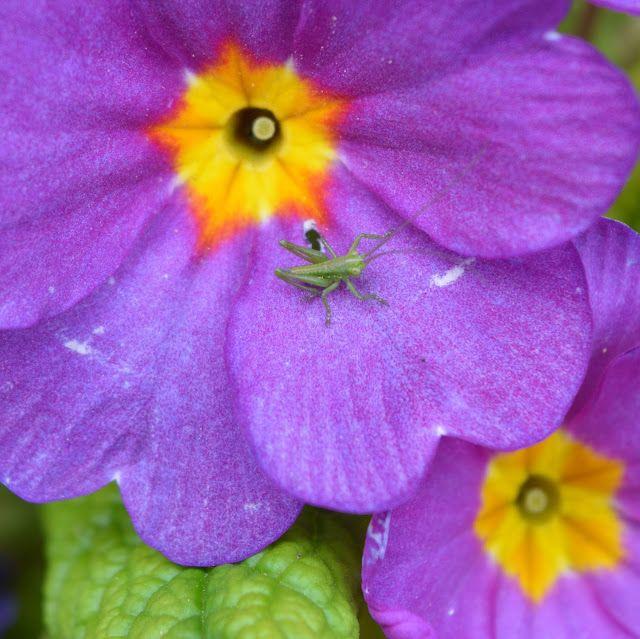 Bemerry.B: Photos - Fleurs/Flowers