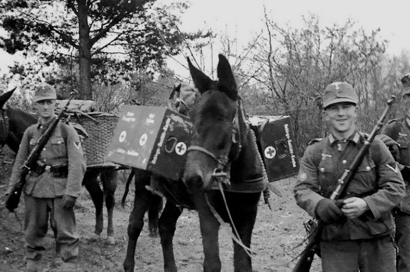 Image result for ww2 german Gebirgsjager with donkey