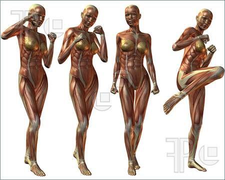 Illustration Of Female Anatomy Body Royalty Free Illustration At
