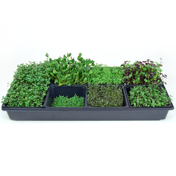 Sectional hydroponic microgreens growing kit grow fresh micro sectional hydroponic microgreens growing kit grow fresh micro greens for indoor gardening includes seeds workwithnaturefo