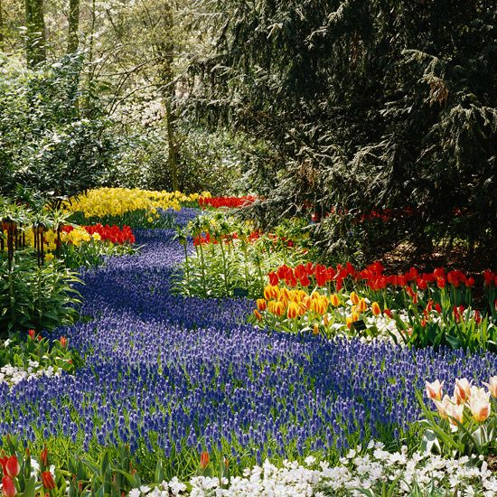 Bulb Planting Tips From A Dutch Garden   Gorgeous!! Fall Is The Right Time