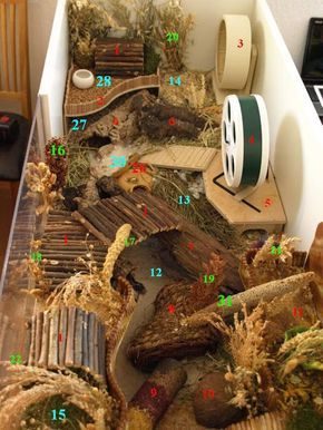 So sieht artgerechte Haltung aus!!! Hamster habitat