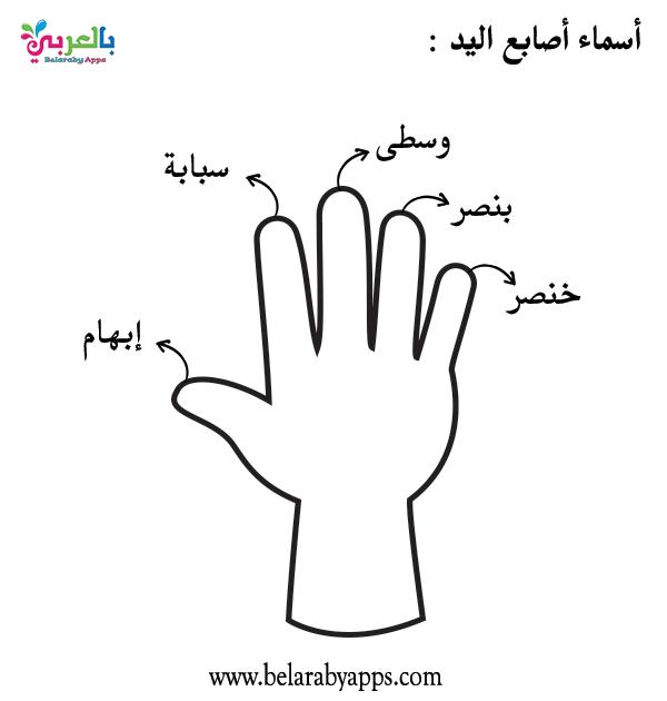 صور ورسومات تلوين وحدة الأيدي اوراق عمل وحدة الايدي للتلوين بالعربي نتعلم In 2021 School Programs Peace Gesture Peace