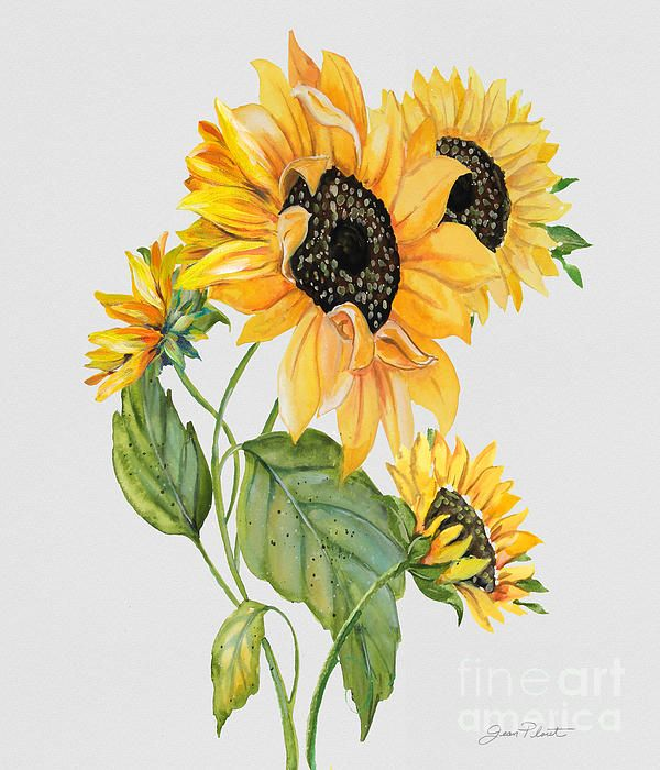 New print available on plout-gallery.artistwebsites.com! - 'Floral Botanicals-jp3787' by Jean Plout - http://plout-gallery.artistwebsites.com/featured/floral-botanicals-jp3787-jean-plout.htmlNone