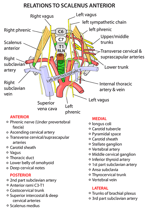 Layers Of Abdominal Wall Diagram Instant Anatomy Head And Neck Nerves Autonomic