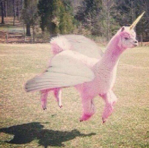 funny. pink llama unicorn