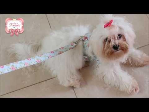 5a96b3101 Como fazer uma linda Coleira Peitoral de Luxo Para Cães - YouTube ...