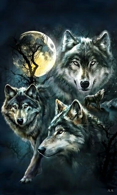 Pin by Jim Carmody on Wolves rock Wolf painting, Wolf