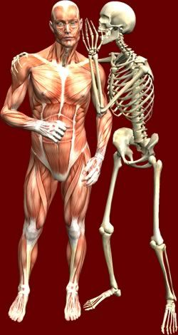 Anatomy Arcade OH MY GOSH Fun Site Play Games To Learn Muscles Skeleton And More