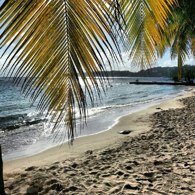 Guadeloupe Beach: Un Petit Plouf En Fin De Journee Ca Vous Dit? Guadeloupe
