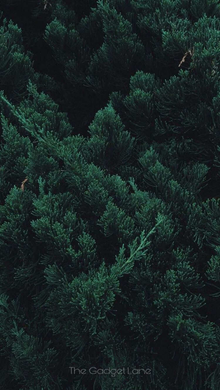 Black Theme Wallpaper Forest Wallpaper Iphone Forest Wallpaper Green Wallpaper