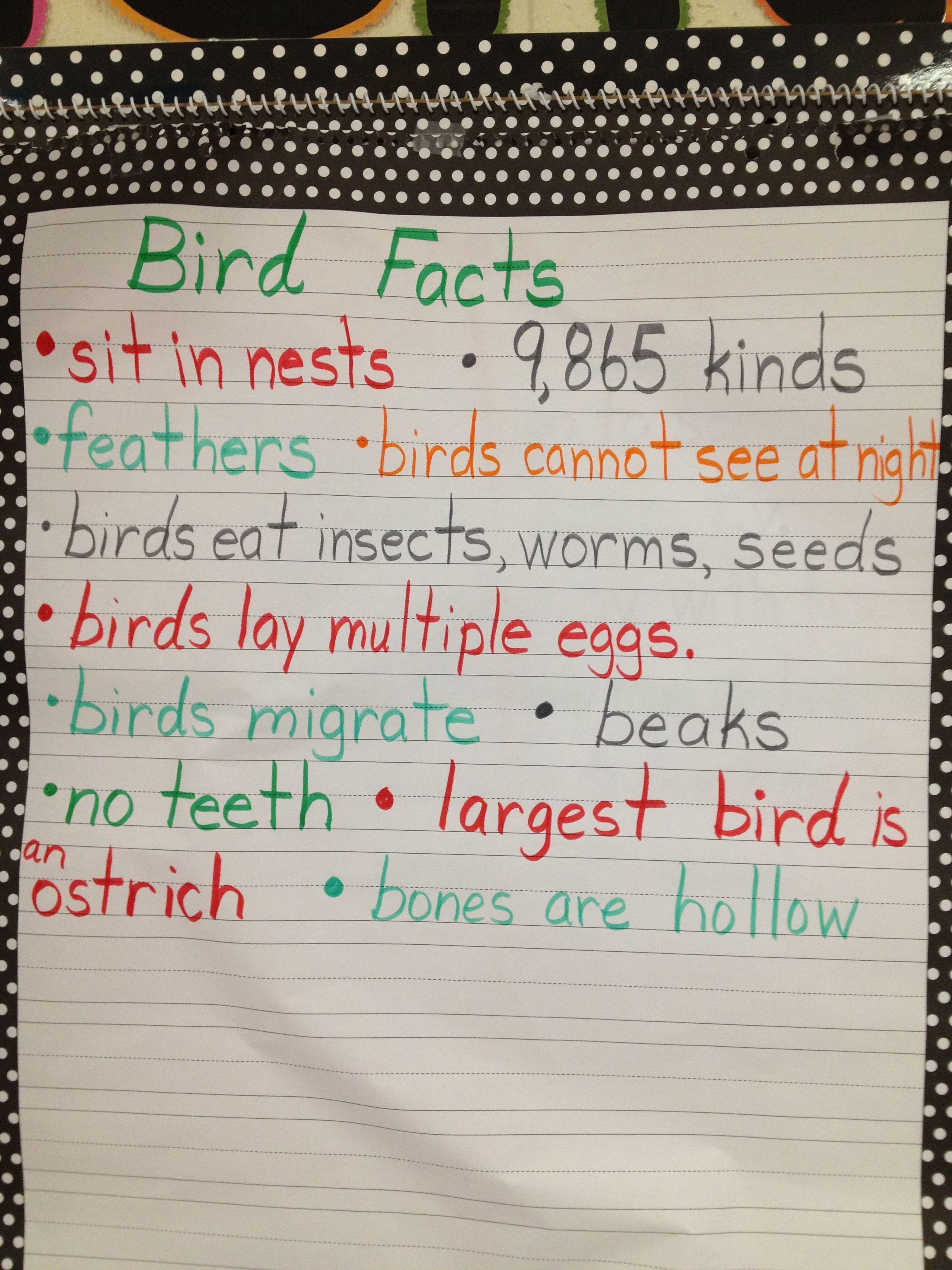Bird Facts Chart