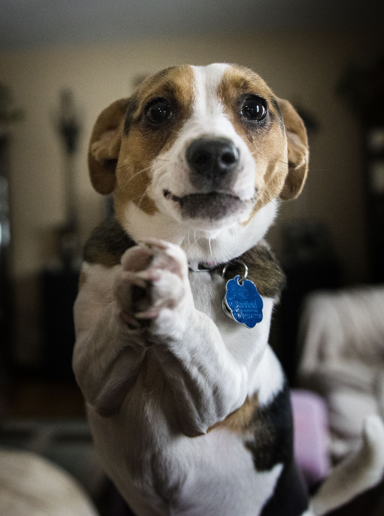 PLEEEEEEASE! Dogs, Animals