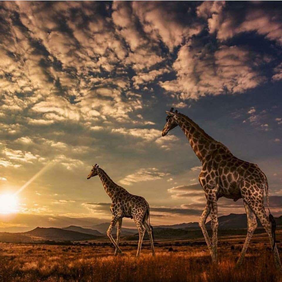 Afrika tiereBild von Sabine Julieka Danelon auf MOTHER