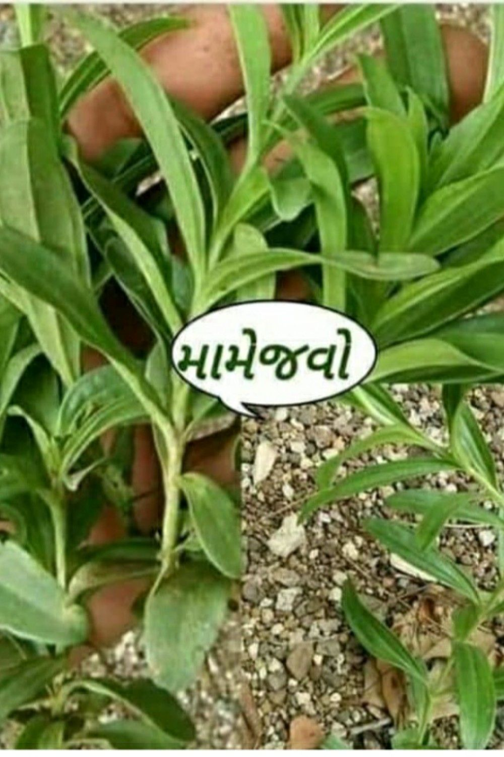 Best 50 vanaspati name with photo images in 2020 Plant