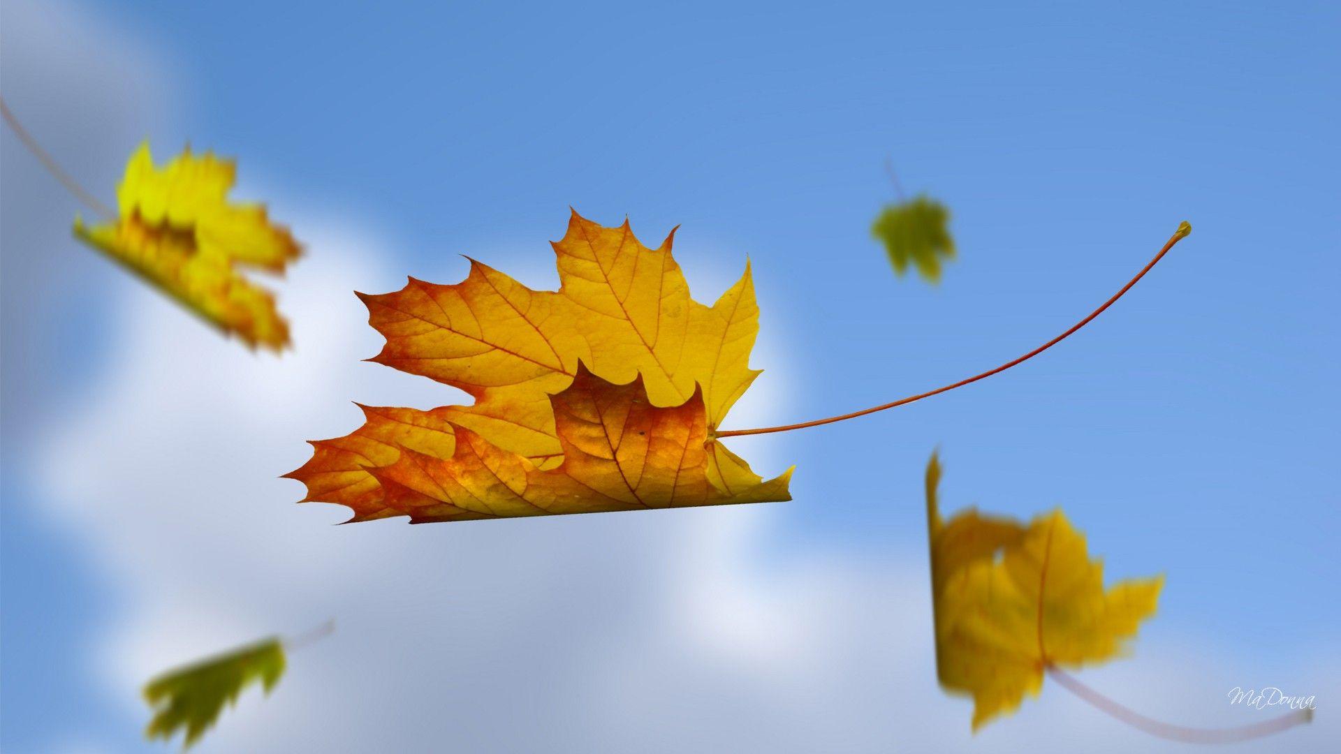 Falling Leaves 3d Falling Leaves Hd Wallpapers 3d Falling Leaves Hd Wallpapers Autumn Leaves Art Autumn Leaves Leaf Art Falling leaves moving wallpaper