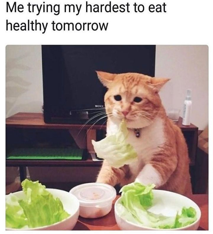 ef3905afed58b4fc3c81f599d170854b fresh animal memes that will make you laugh out loud 1 catfunny
