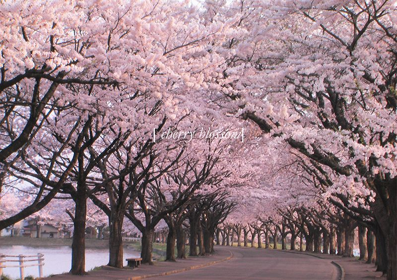 Koichi Takada Architects Landscape Nature Photography Nature Garden