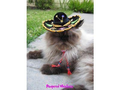 Dog Sombrero