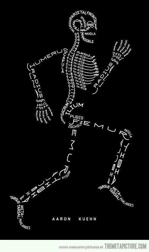 Latijnse benaming van onze botten
