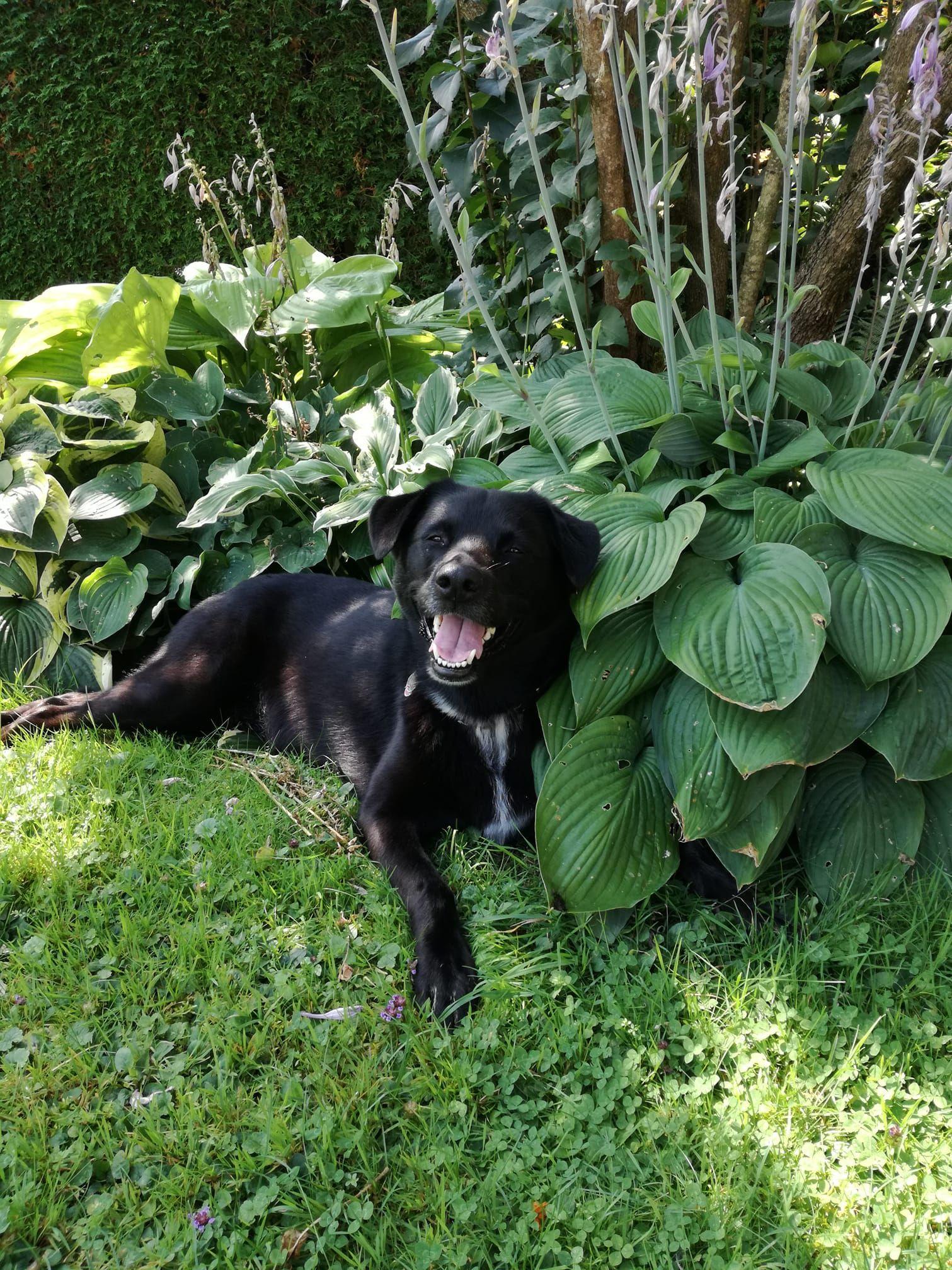 Pin Von John Ferguson Auf Doggies In 2020 Ferien Mit Hund Hunde Urlaub Mit Hund