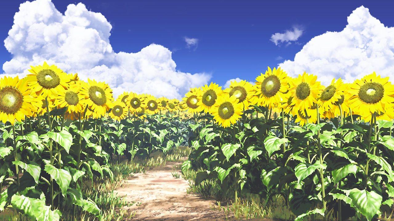 Konachan Com 199601 Clouds Flowers Grass Ihara Asta Nobody Original Scenic Sky Sunflower Jpg 1280 720 Anime Scenery Anime Background Anime Images
