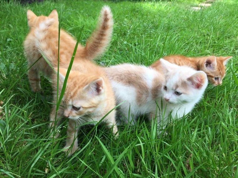 Kittens For Sale Kitten For Sale Kittens East London