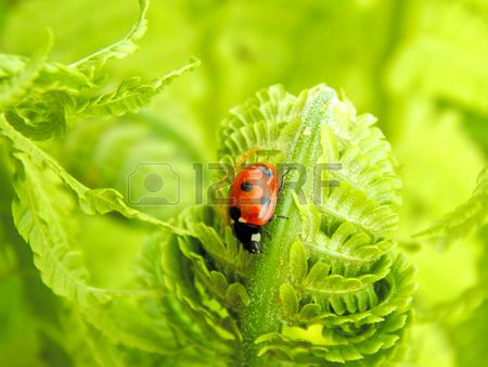 Ladybug on leaf fern close-up