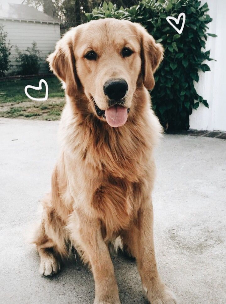 Angelina Brim Hunde Niedliche Hunde Susseste Haustiere