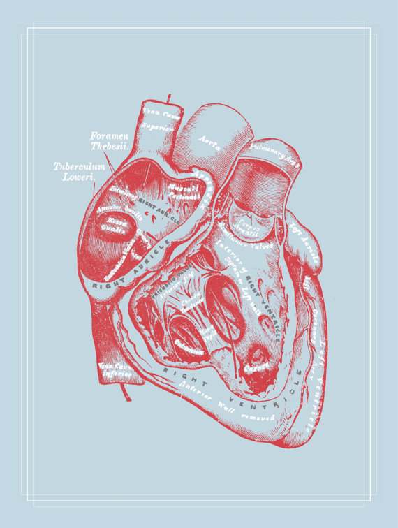 Gray\'s Anatomy Heart Poster Powder Blue Red Cardiology Medical Art ...
