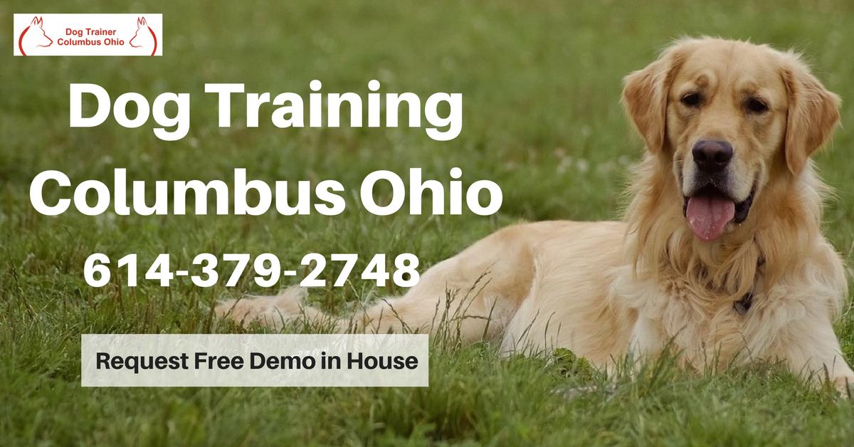Best Dog Training In Columbus Ohio Dog Trainer Dog Training Dog Training Obedience