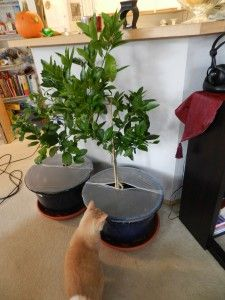 Keep The Cat Out Of Plants With Press N Seal Wrap