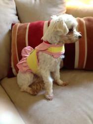 Adopt Marilyn Monroe Adopted On Maltese Dogs Rescue Puppies