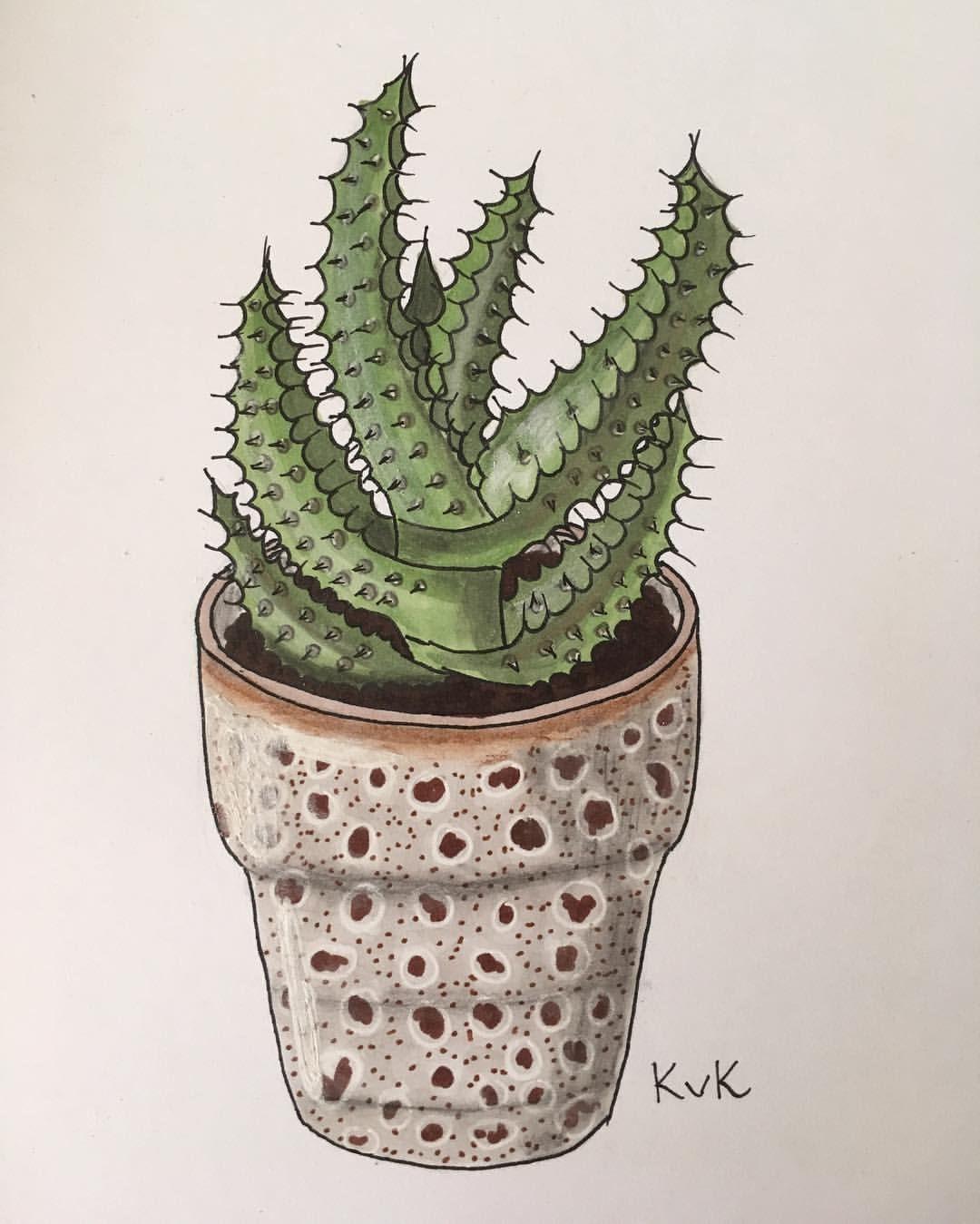 297 vind-ik-leuks, 9 reacties - plants & Illustrations ♡♡ (@drawingplantlady) op Instagram: 'Aloë aculeata drawing  #drawingplantlady'