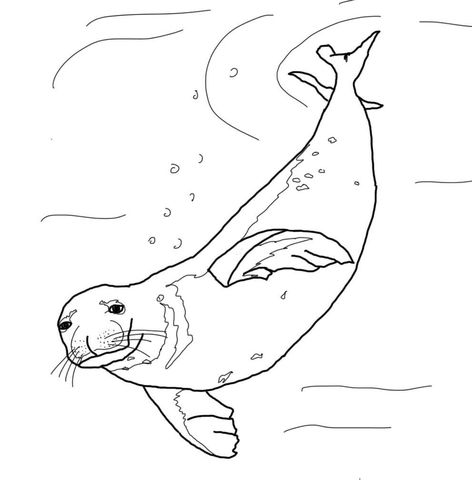 Monk Seal Swimming Underwater Coloring Page Monk Seal Coloring