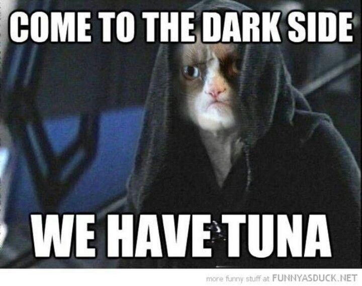 Pin By Damon Cheritt On Funny Grumpy Cat Humor Grumpy Cat Quotes Grumpy Cat Meme