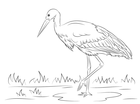 White Stork Coloring Page Coloring Pages Stork Printable Coloring Pages