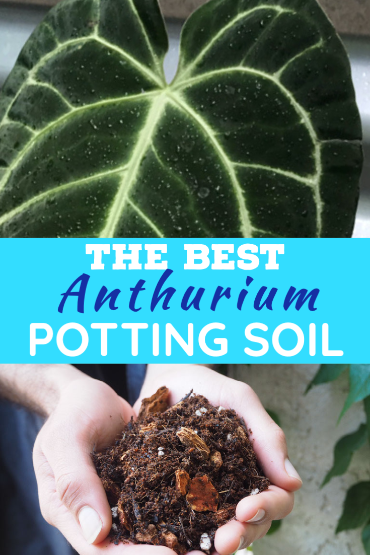 The Best Potting Soil For Anthurium Plants Tropical Plants Anthurium Plant Organic Soil