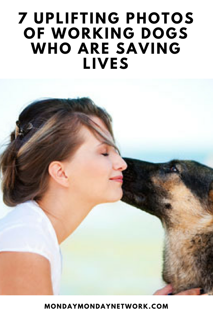 7 Service Dogs That Save Lives recommend
