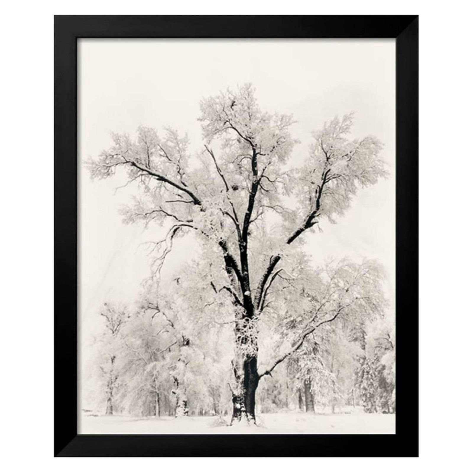 Oak Tree Framed Wall Art By Ansel Adams Ansel Adams Framed Art Prints Amanti Art