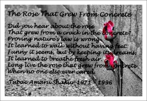 The Rose That Grew From Concrete By Tupac Shakur Tupac Tupac