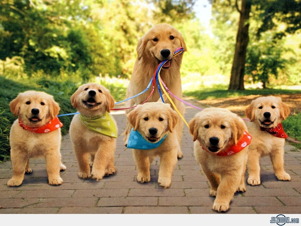 Pin By Carol Barros On Glorious Golden Retrievers Pets Animals Puppies